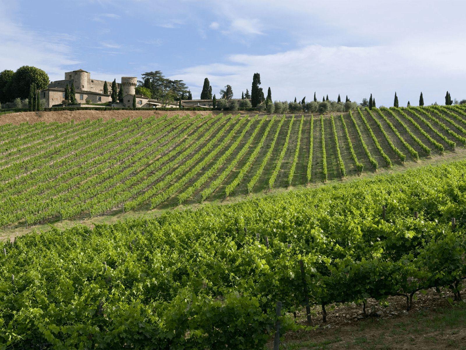 Toskana i Firenca: Toskana: vinogradi, maslenici i dvorci