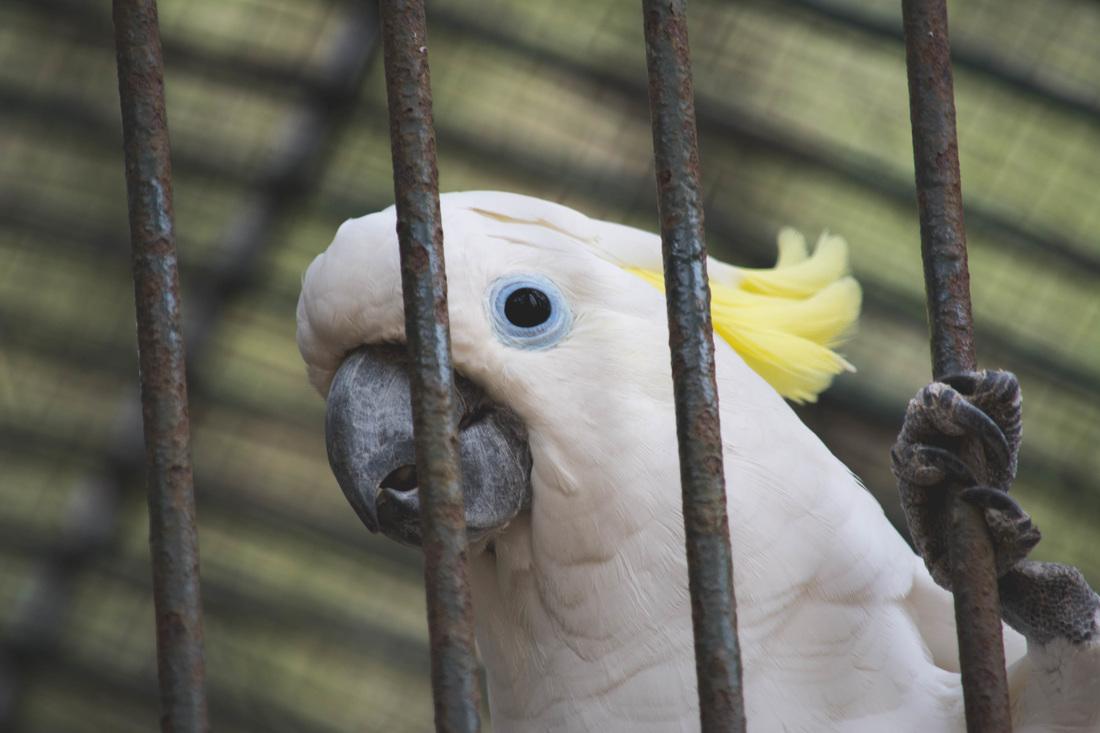 Najbolje od Istre: Brijuni: papagaj Koki