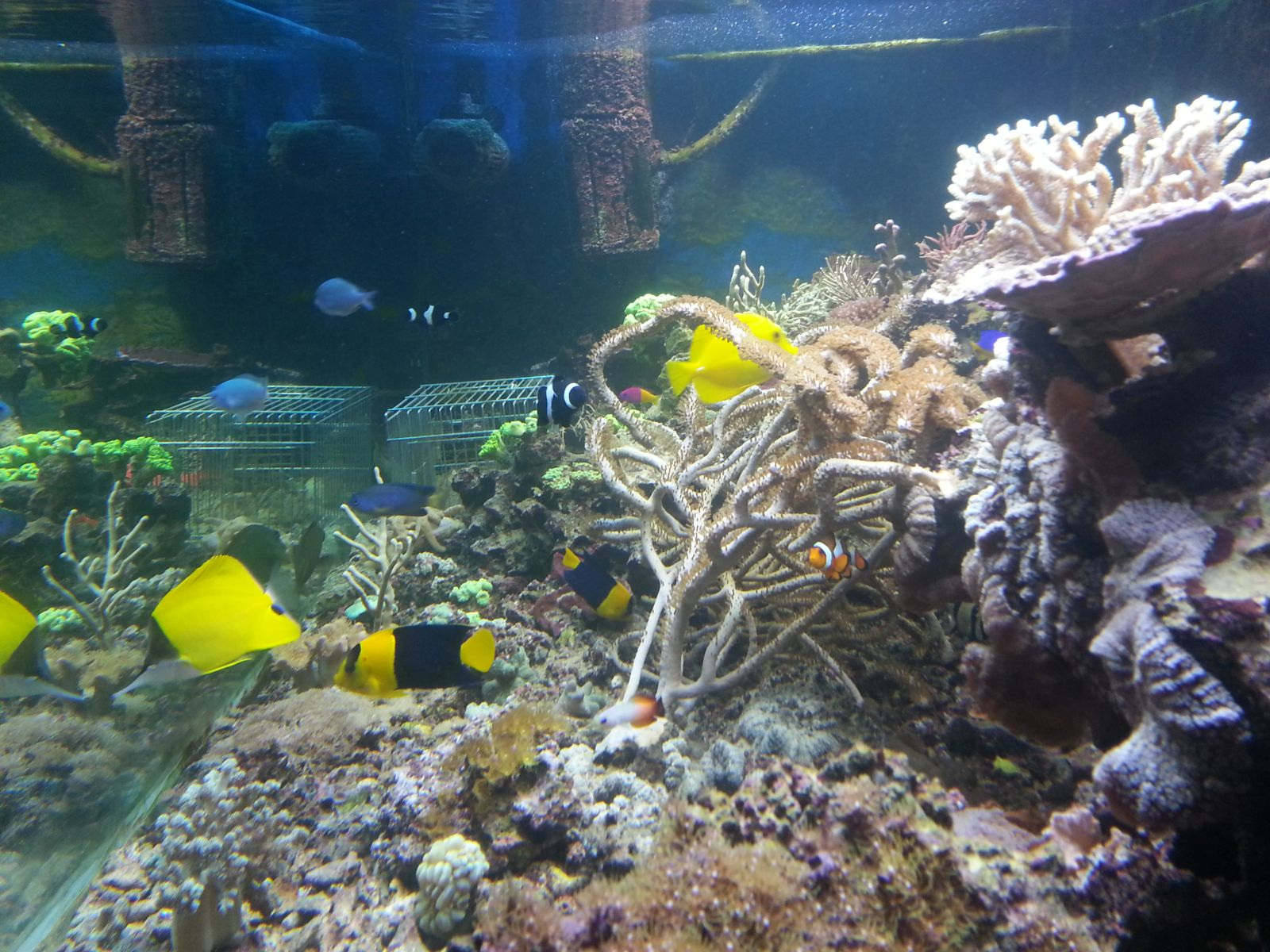 Akvarij Crikvenica