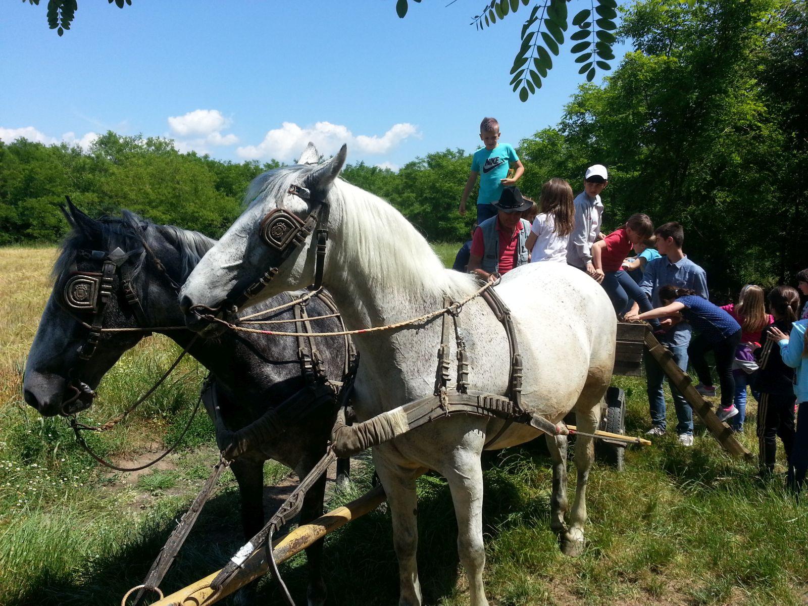 Najbolje od Slavonije: Eko imanje Orlov put