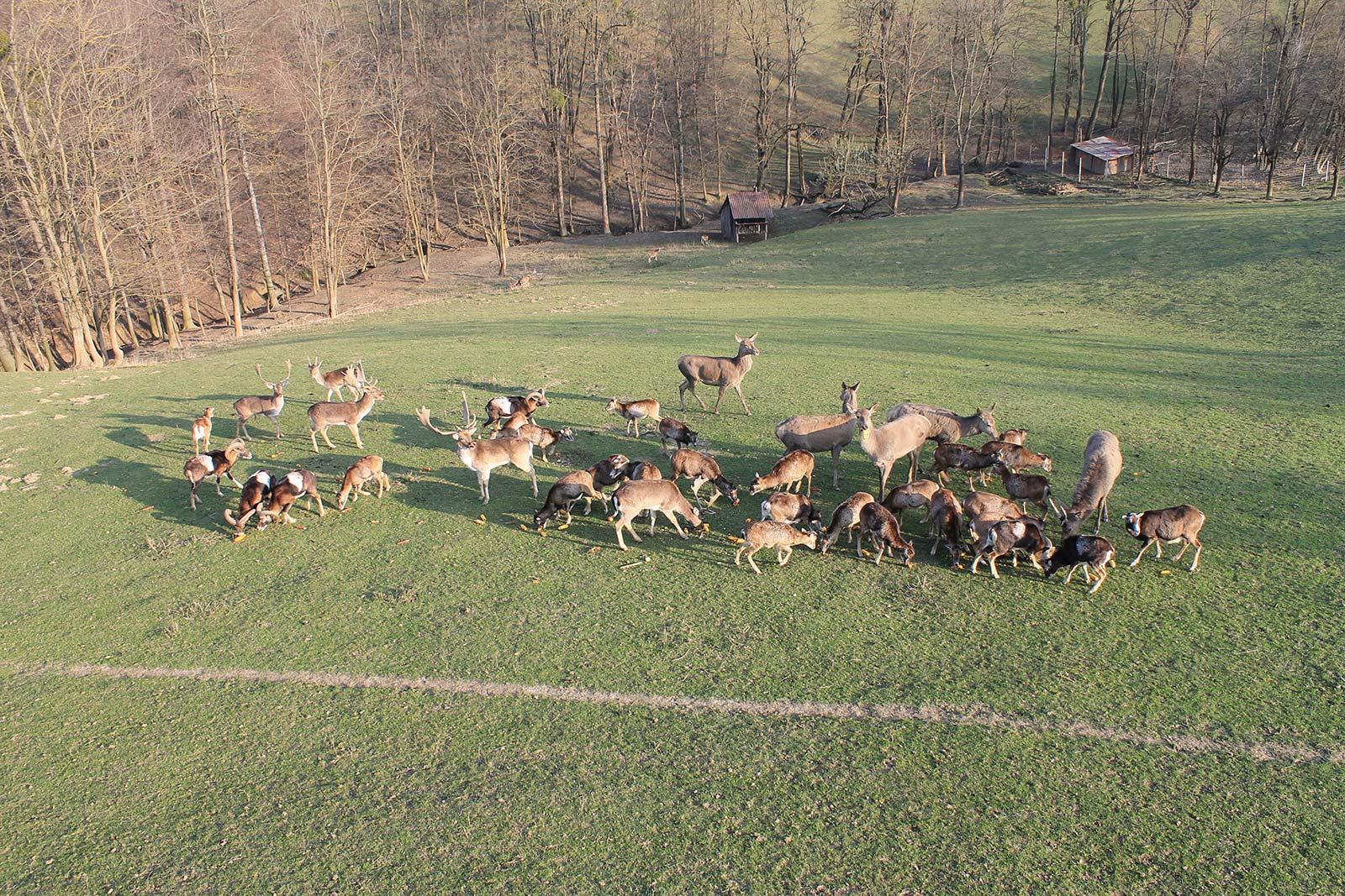 Hrvatsko Zagorje i Međimurje: Sveti Martin na Muri: farma jelena