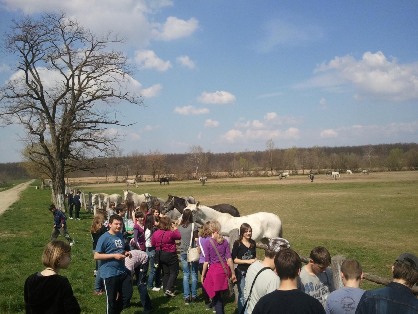 Slavonija: Državna ergela Đakovo – Ivandvor