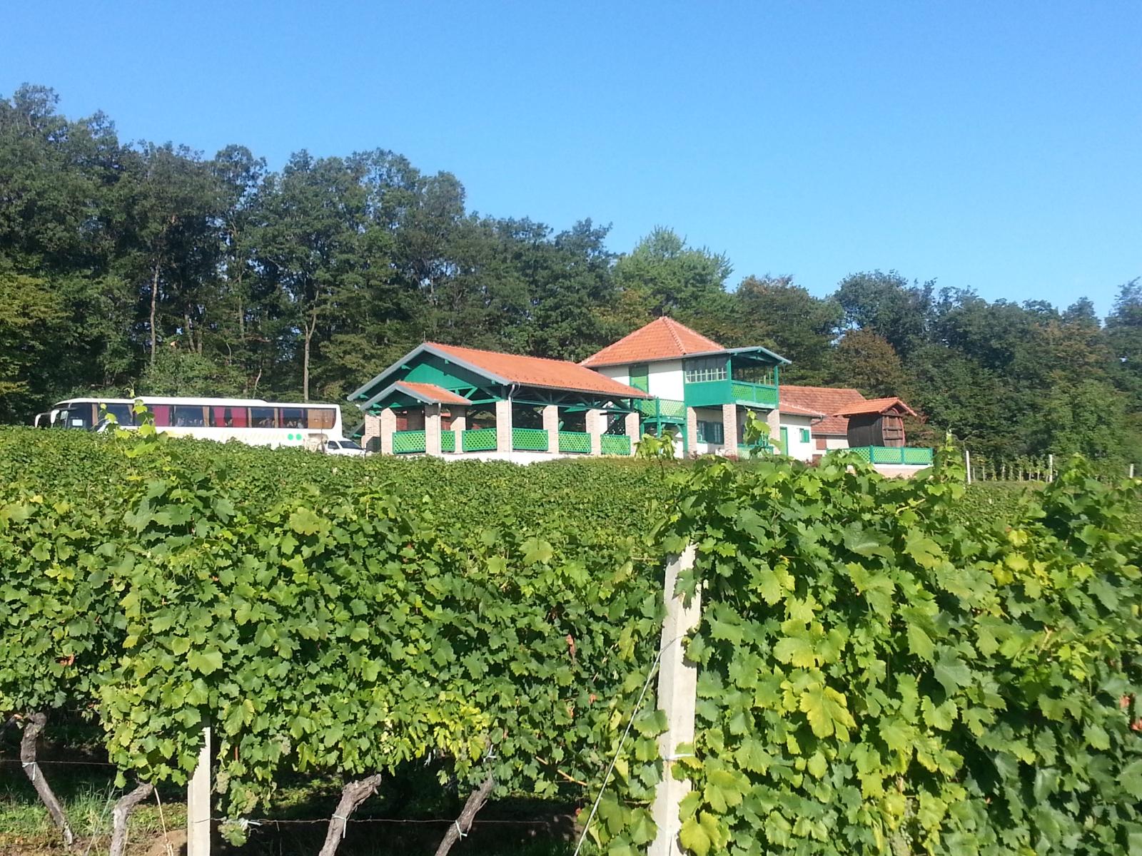 Slavonija: Feričanci: Feravino