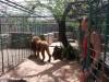 Našice: Zoološki vrt Bizik