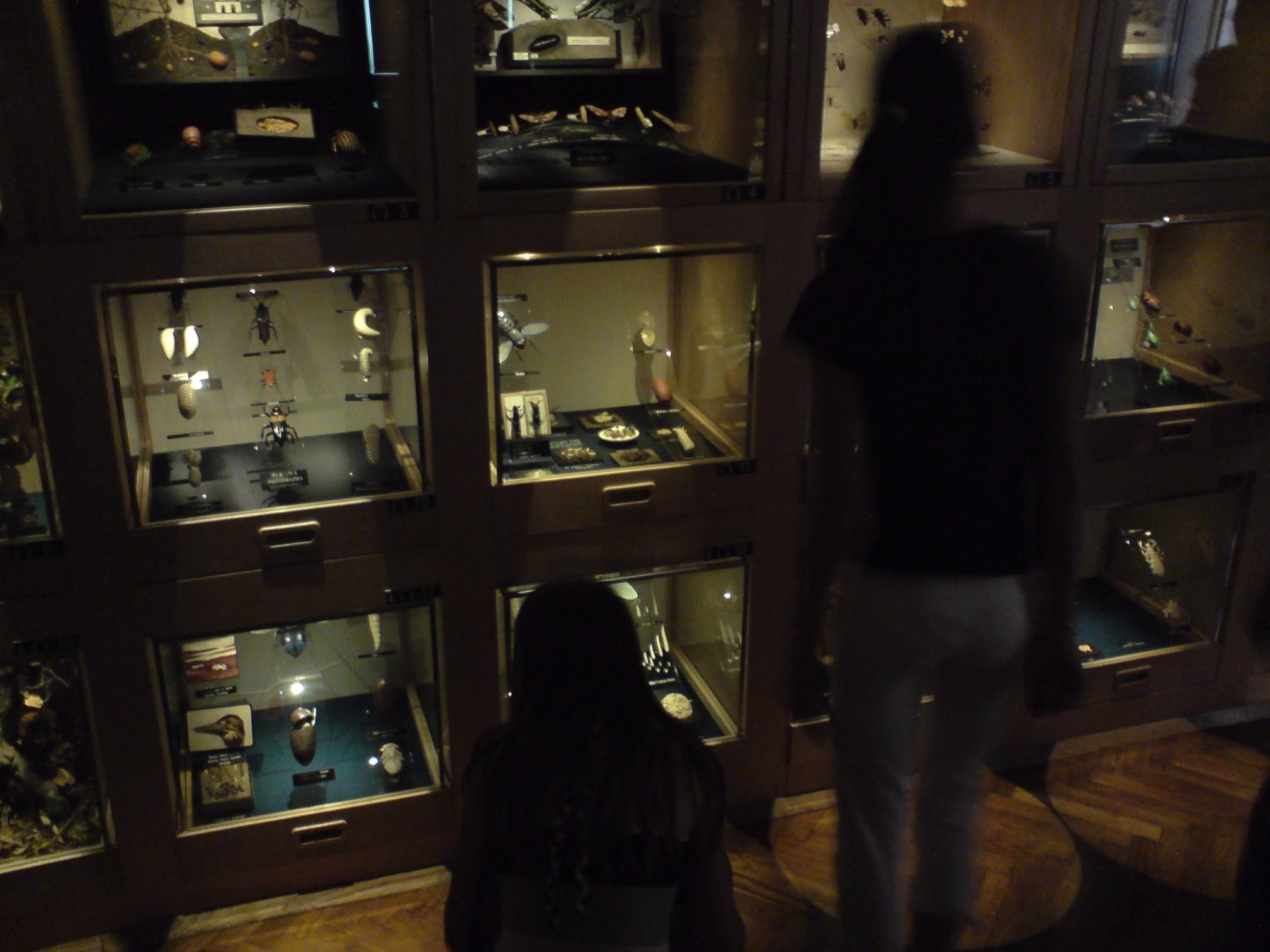 Pračovjek na korak od baroka: Varaždin: Entomološki muzej