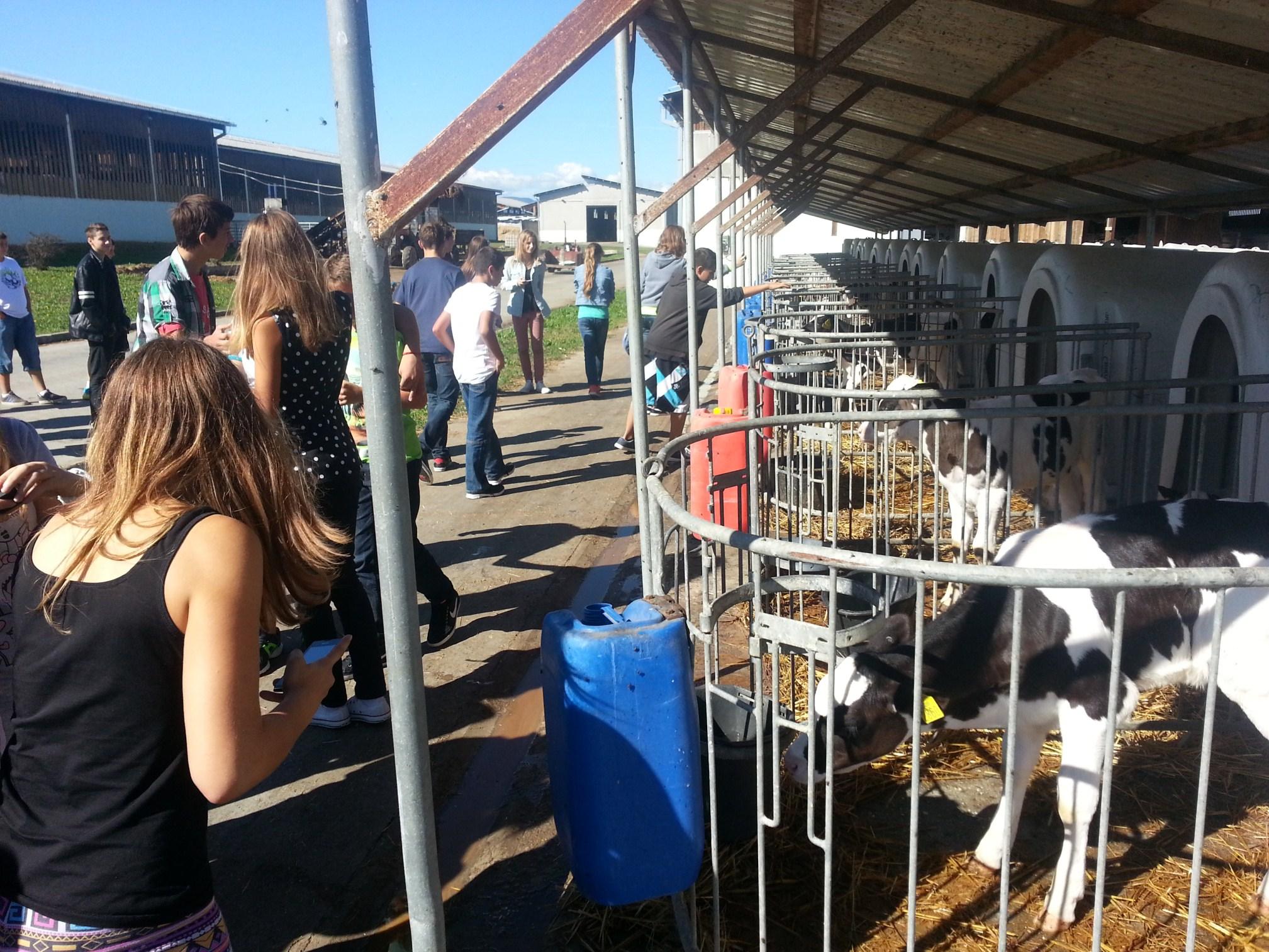 Kako se proizvodi hrana?: Feričanci: Farma Osilovac