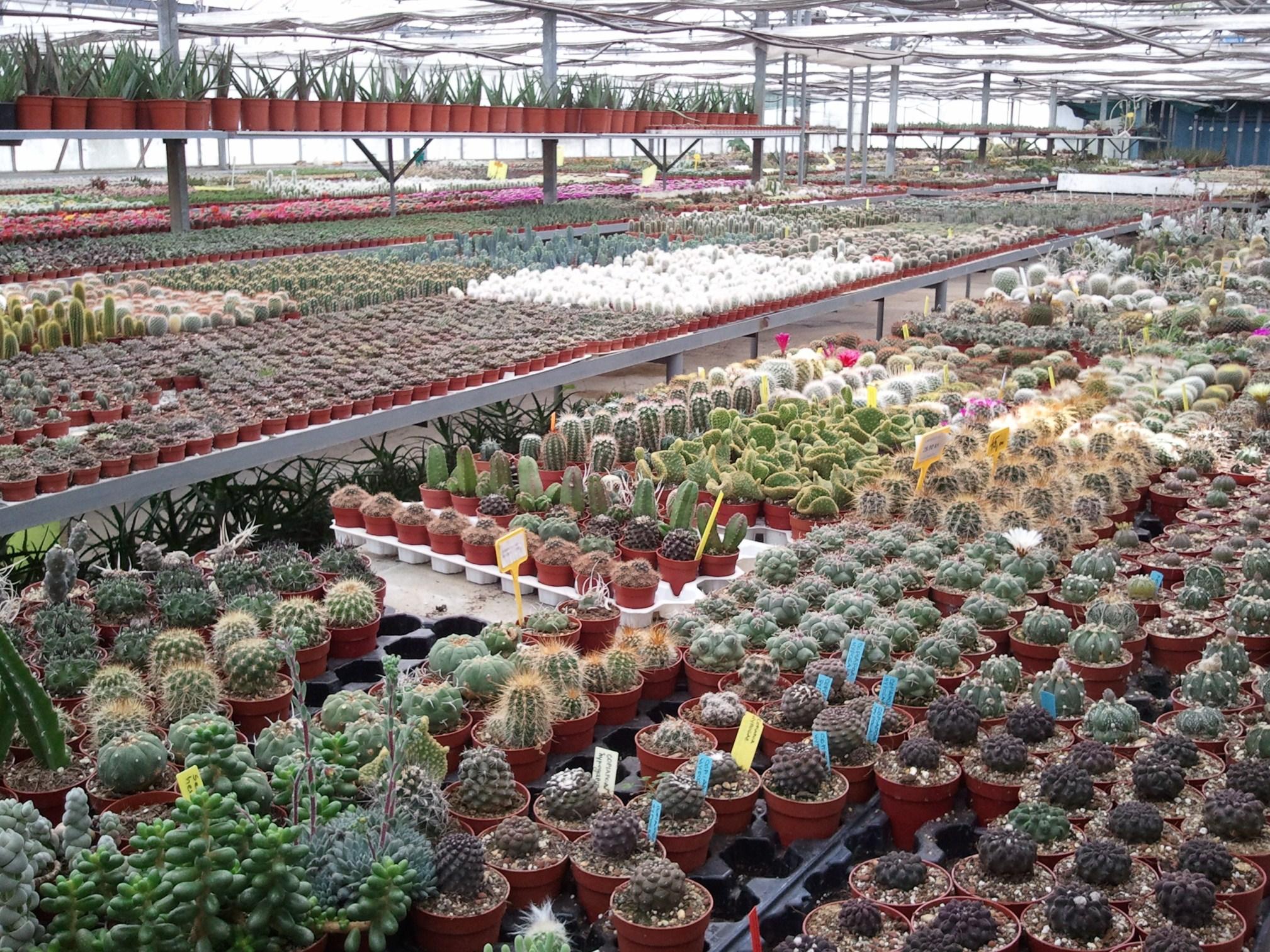 Donose li rode djecu?: Petrinja: Kaktusi Bešlić