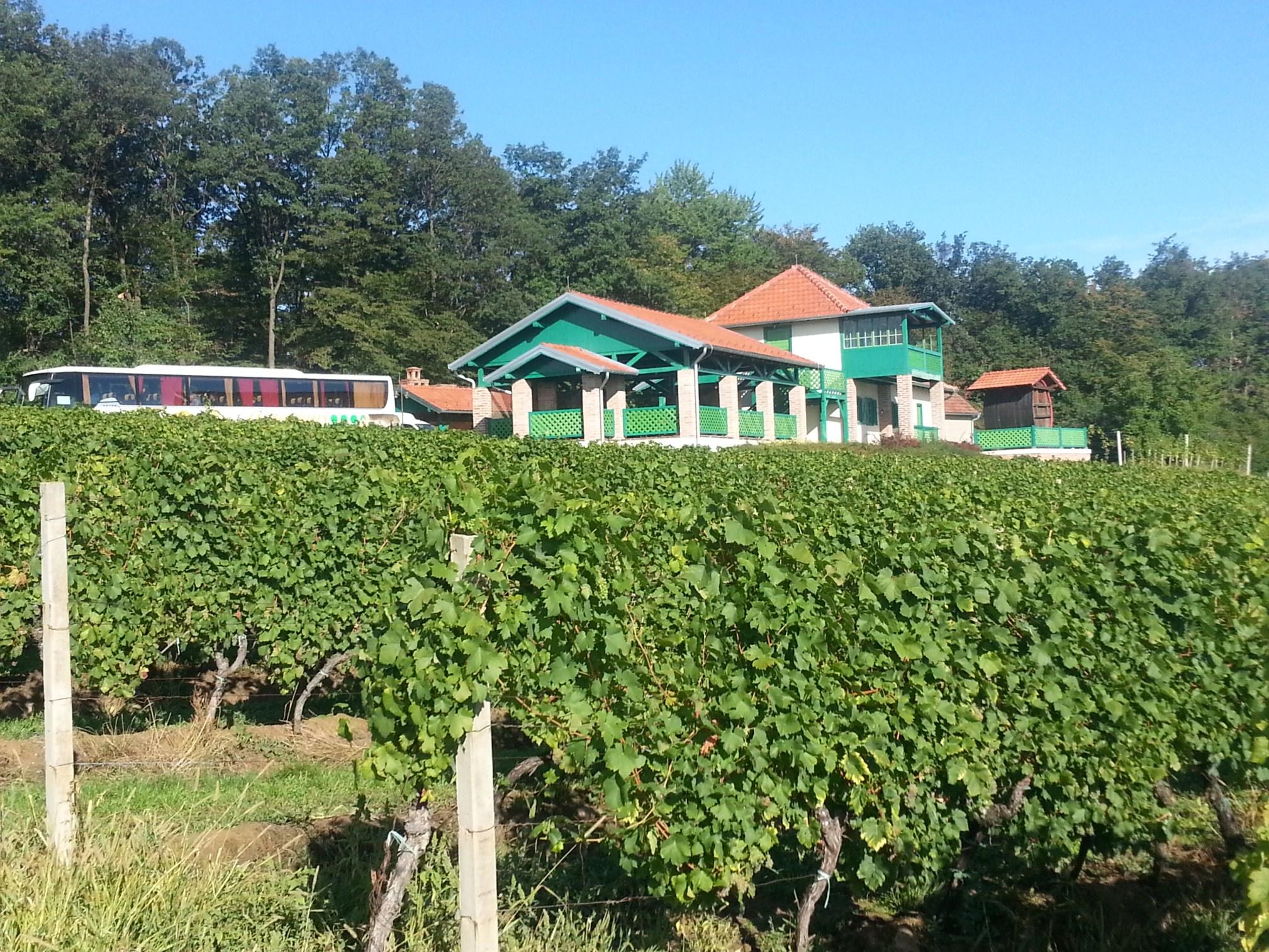 Zabavna biologija - botanika i zoologija: Feričanci: vinarija i vinogradi Feravino