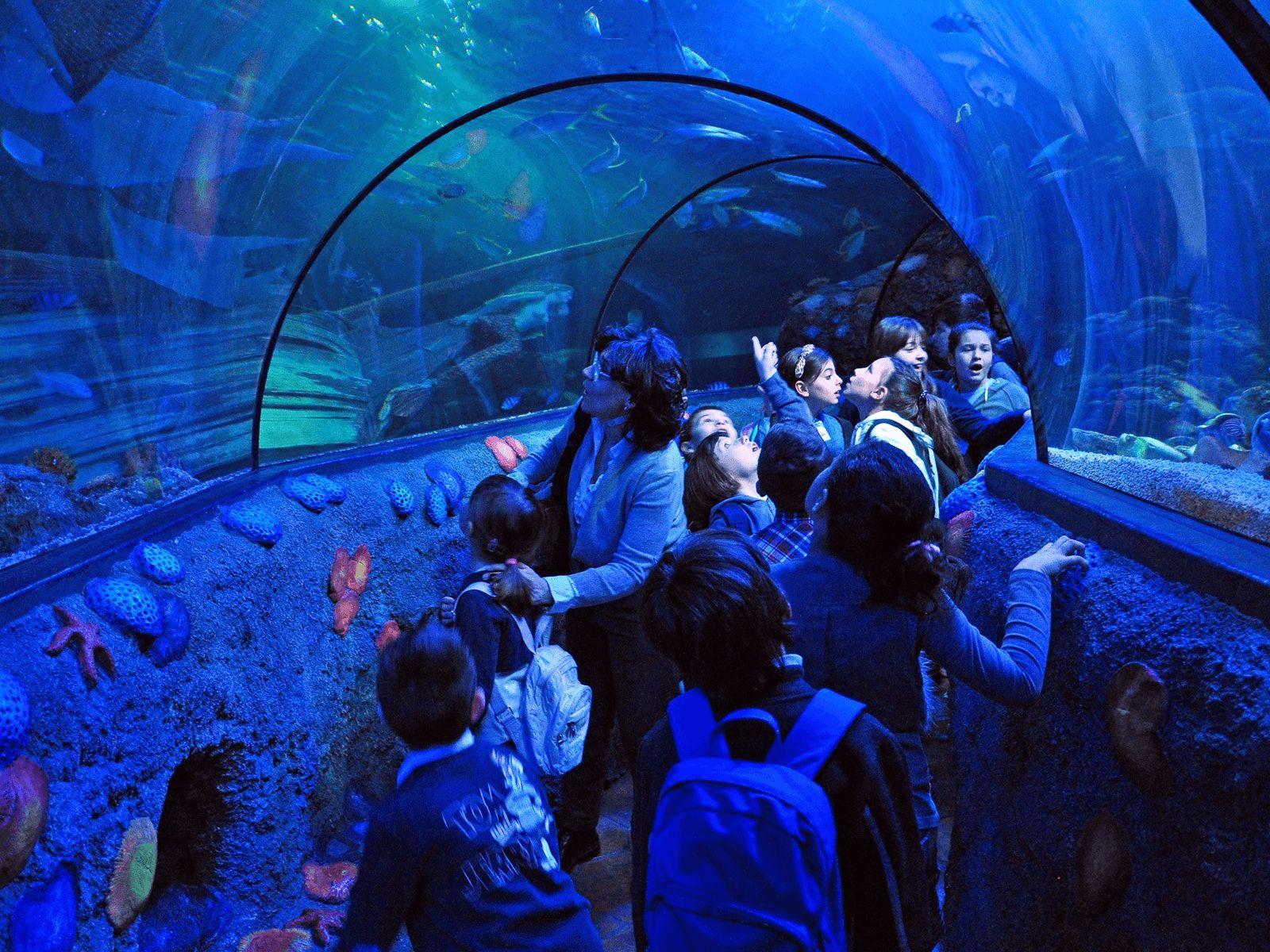 Gardaland: Sea life aquarium: tuneli ispod vode