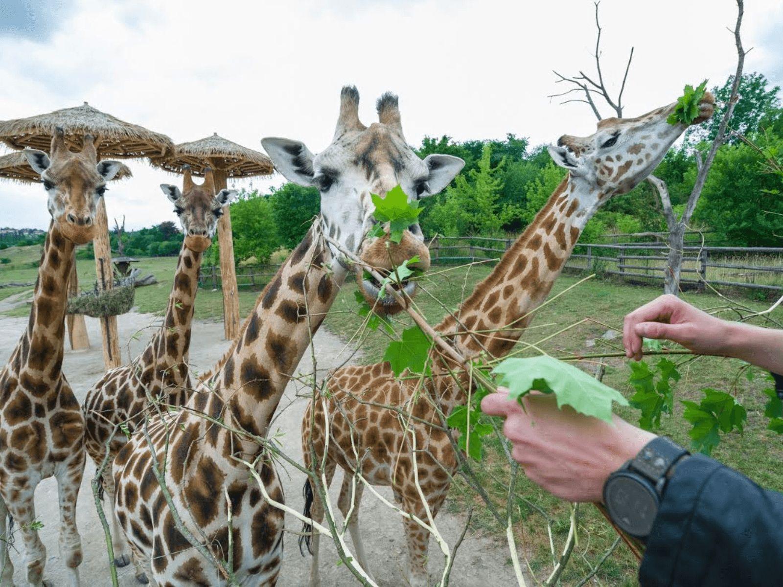 Prag i Krakow: Prag: Zoološki vrt Prag