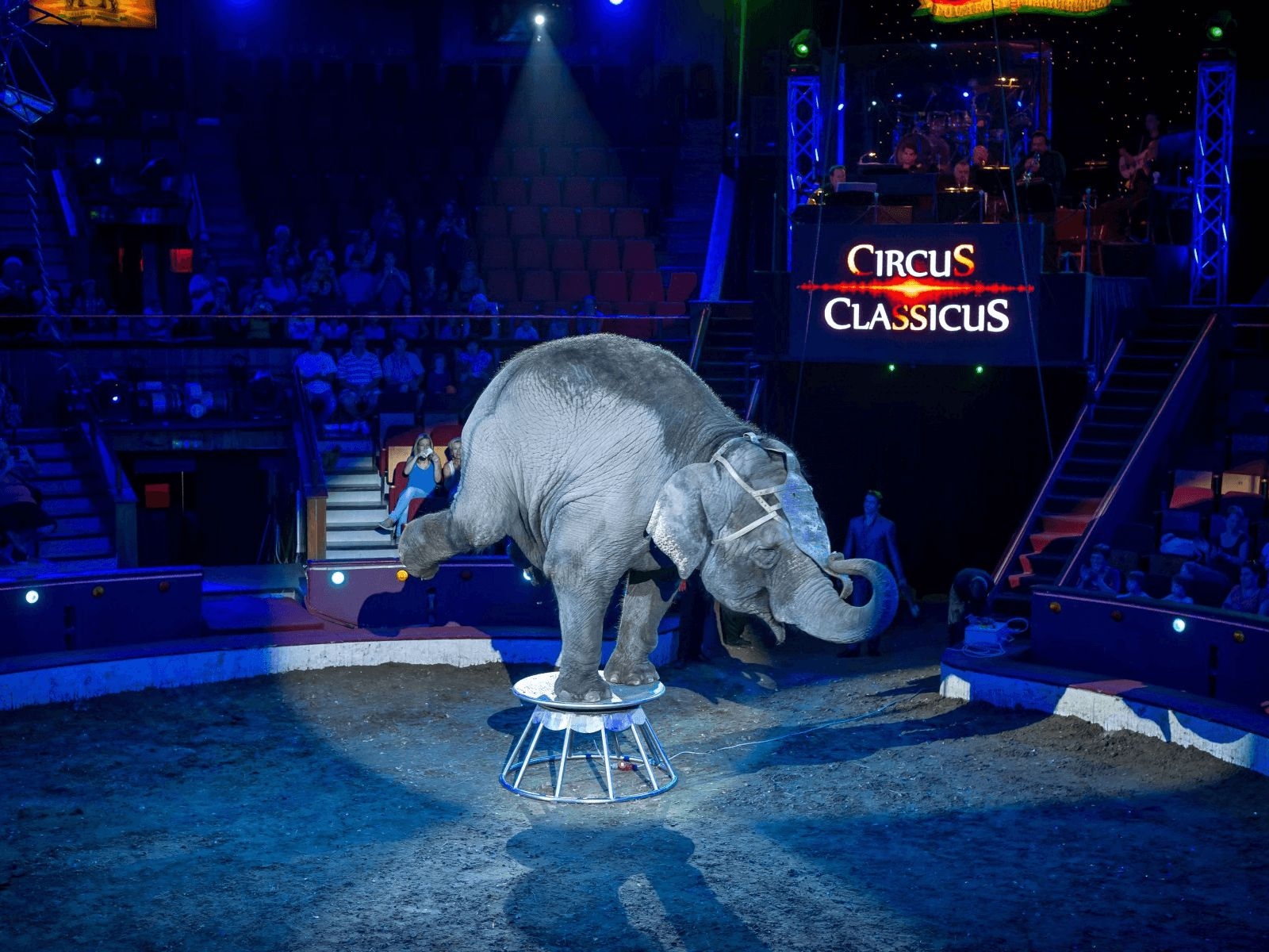 Prag, Beč, Bratislava i Budimpešta: Budimpešta: Budimpeštanski cirkus