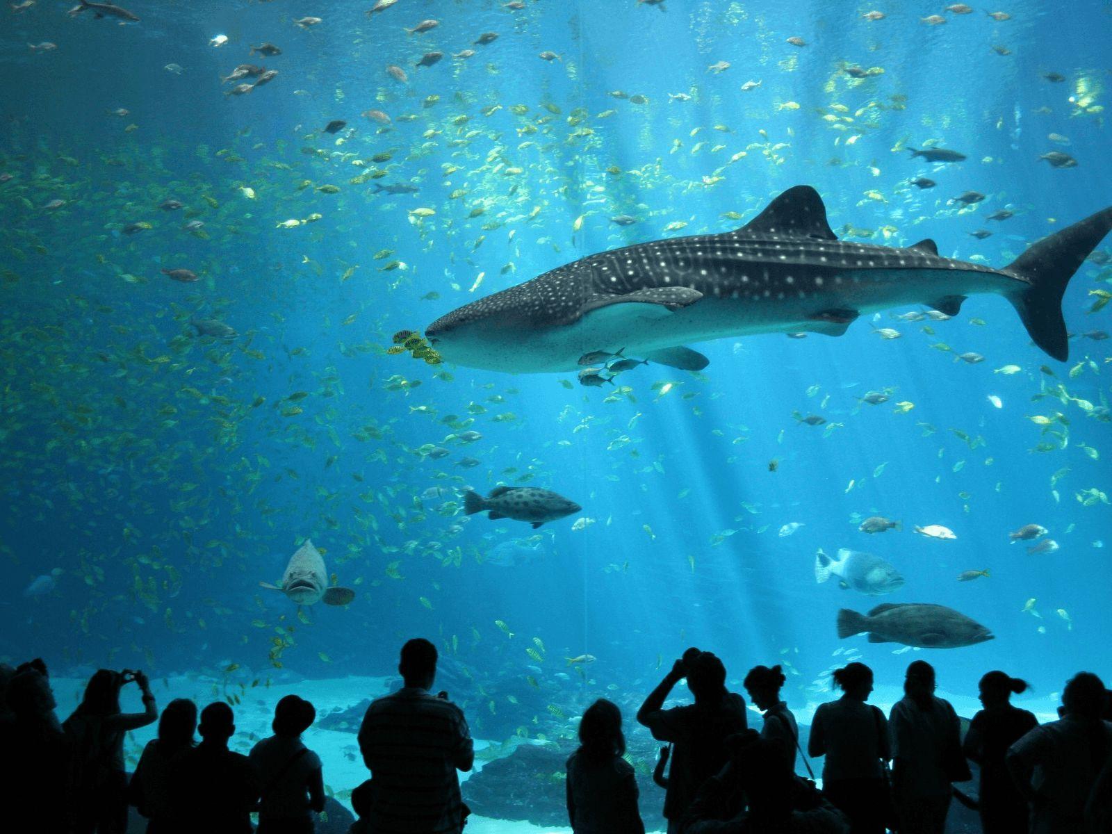 Sjeverna Italija i ljetovalište Rimini: Sea life aquarium