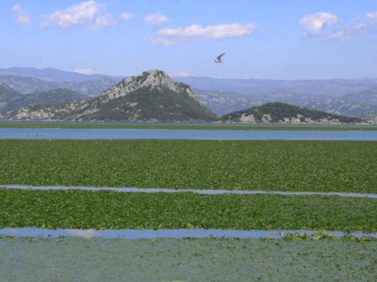 BALKAN TURA - First Minute!: Albanija i Crna Gora: Skadarsko jezero